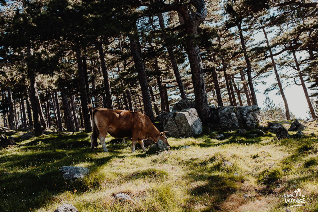 voyageurs du monde, carnet voyage, photo paysage montagne corse
