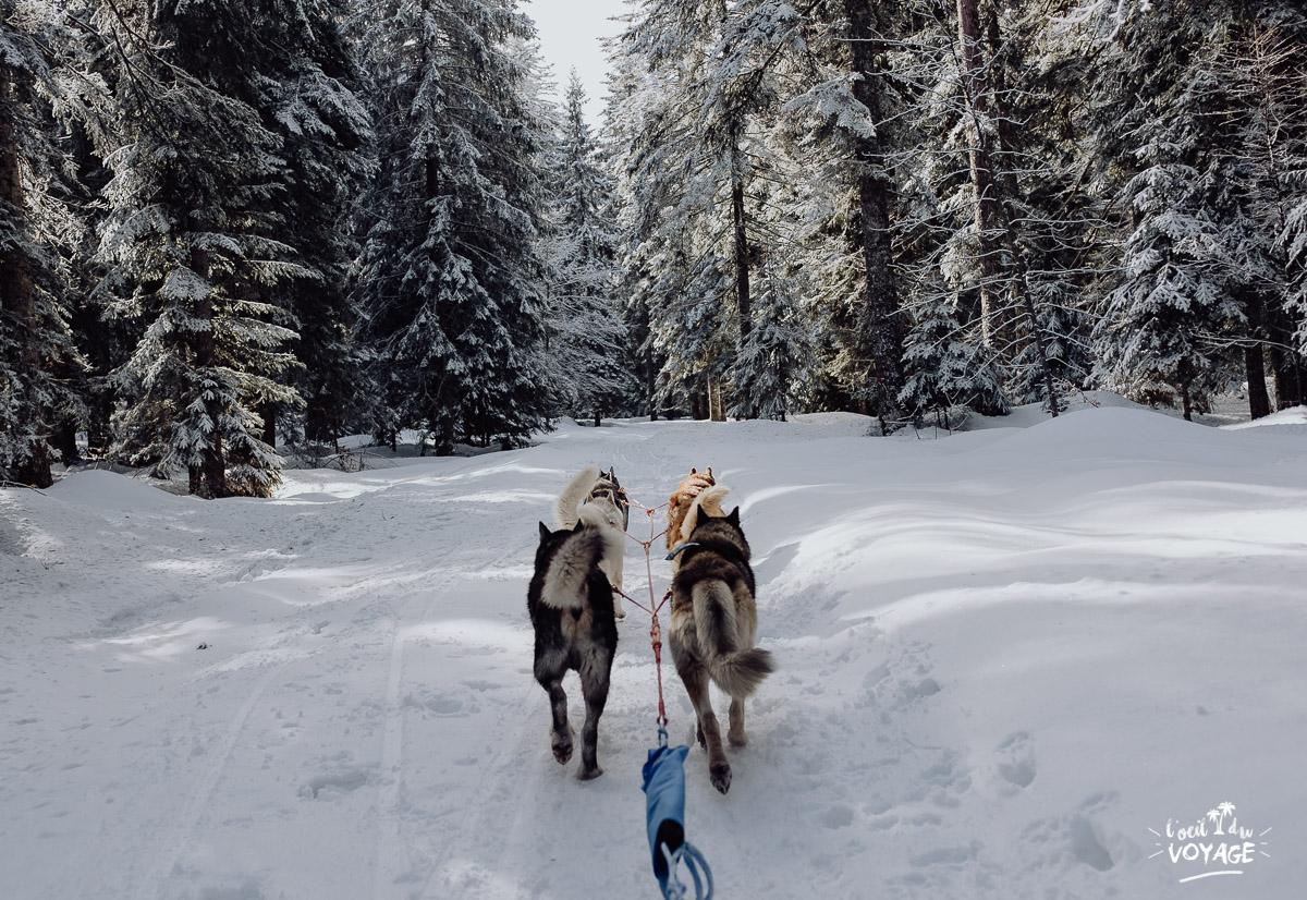 ballade en chiens de traineau avec Christophe Gallot, la Pesse, l'oeil du voyage