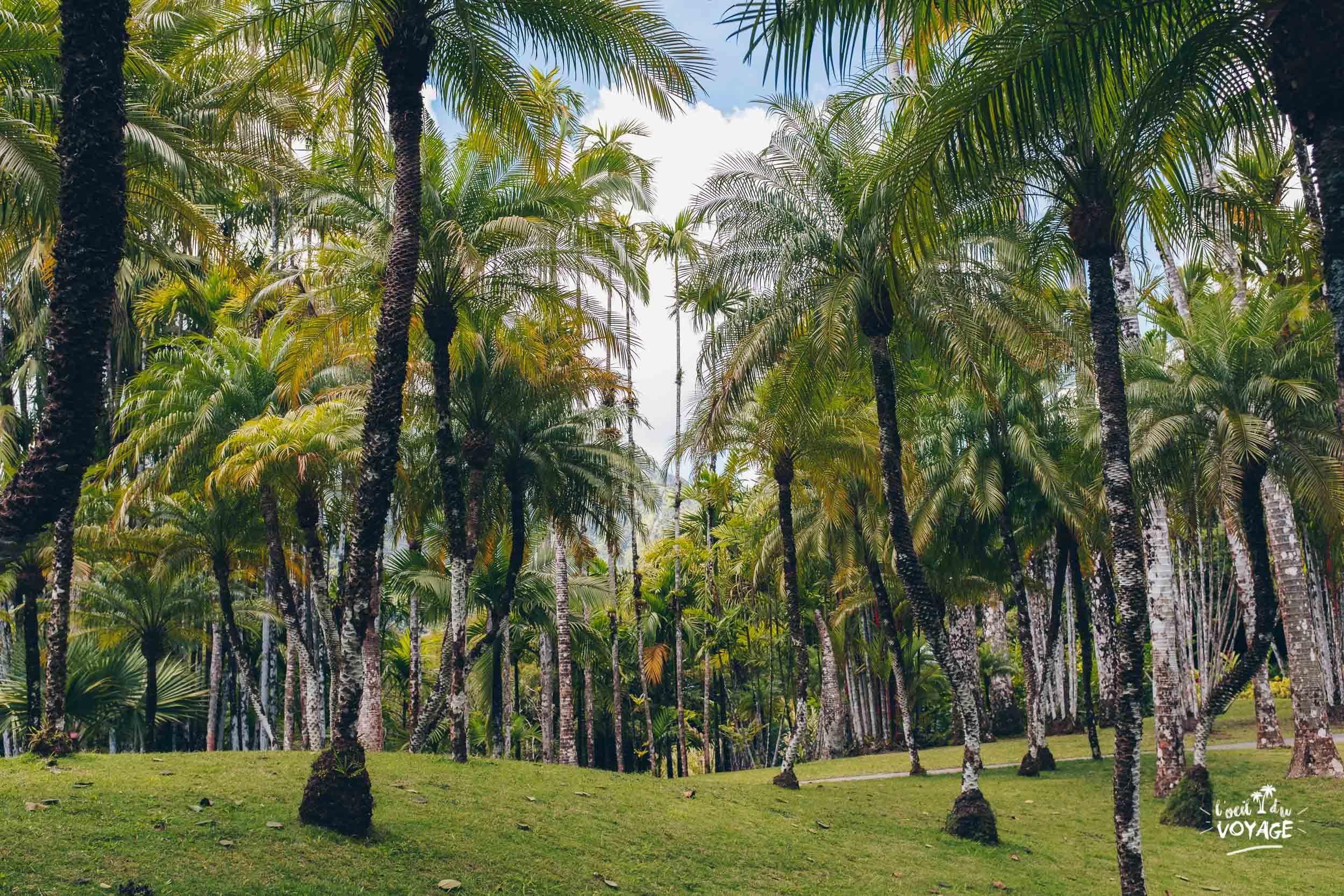 voyage antillais, jardin de balata, meilleur blog voyage france