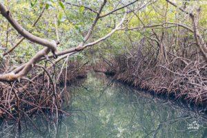 qu'est ce qu'une mangrove, zagaya martinique par l'oeil du voyage, french travel blog