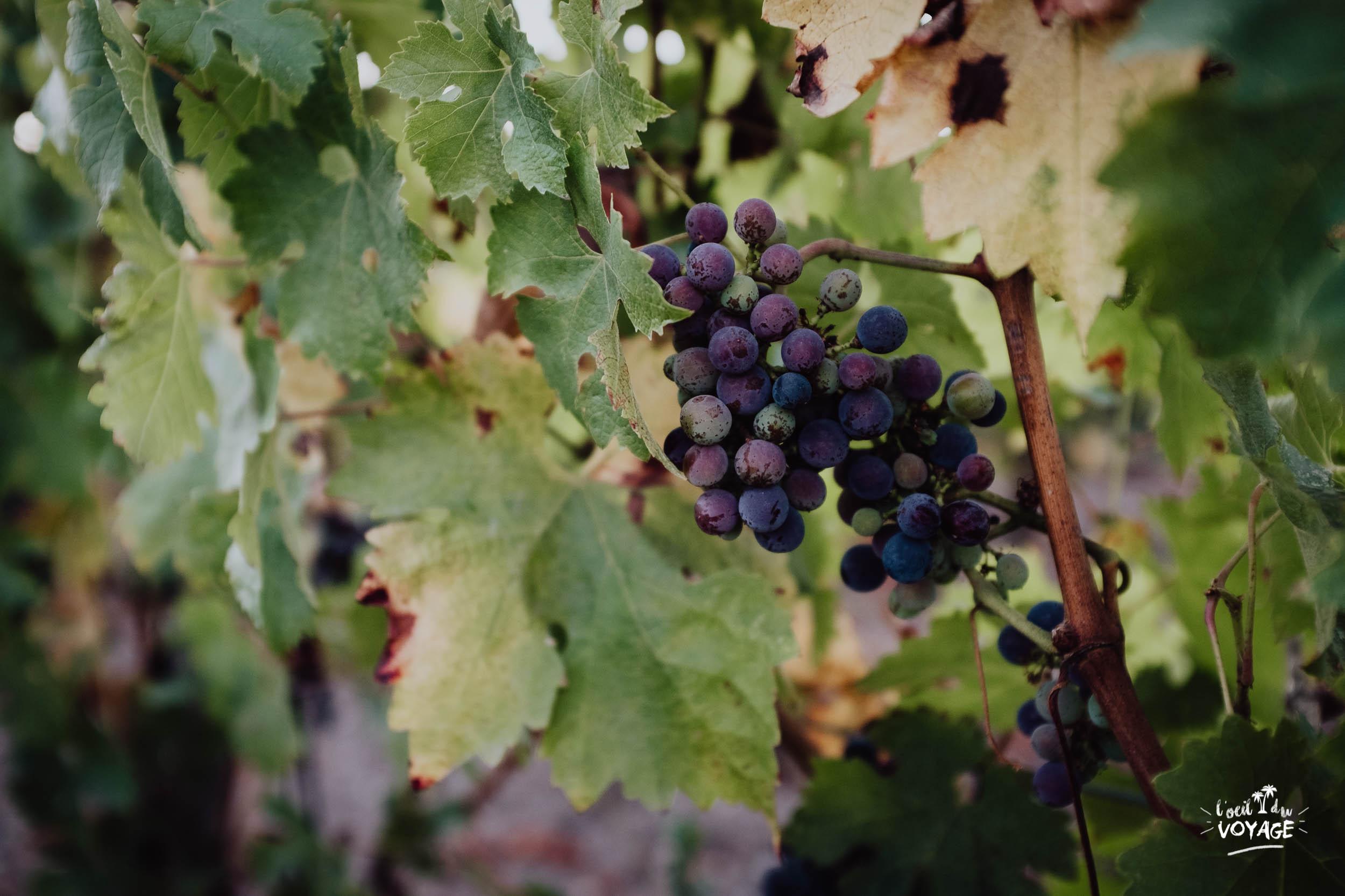 dégustation de vin route des châteaux du Médoc. cet été je visite la France, destination Médoc, tourisme Nouvelle Aquitaine par L'oeil du Voyage, blog voyage
