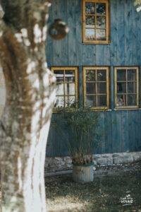 culture du safran en sud charente, le safran de cornelius, l'oeil du voyage